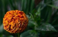 Flower-7