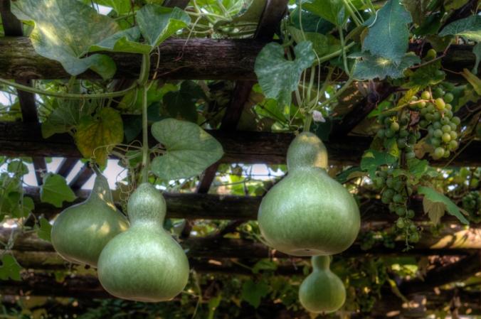 Green-Bay-Botanical-Gardens-2
