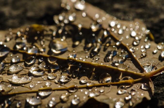 Leaf-Dewdrops-1