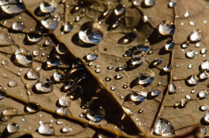 Leaf-Dewdrops-3