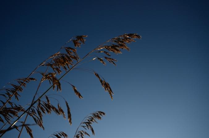 Prairie-Grass