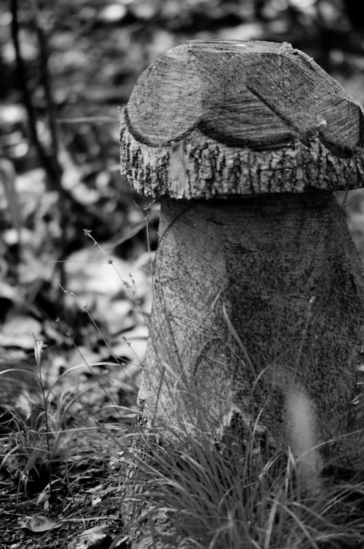 Tree-Shroom-1