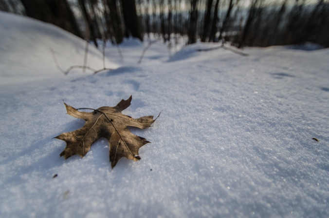 Fallen Leaf 1