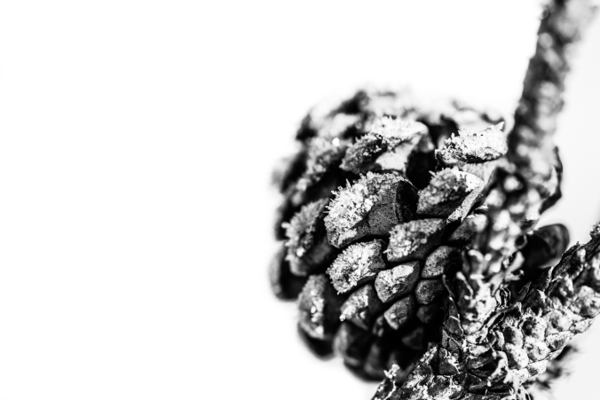 High Key Pine Cone 2